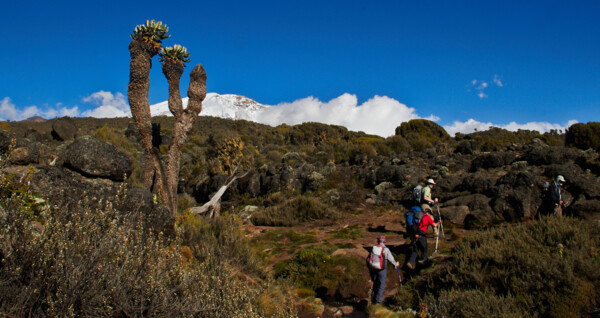 Lemosho Route am Kilimanjaro, Shira Plateau