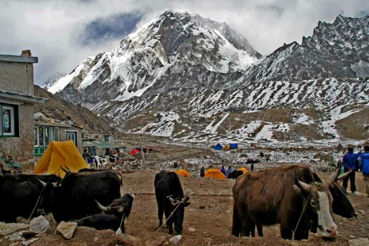 Expedition in Nepal, Transport mit Yaks